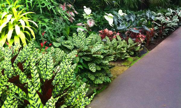 Macam Bunga Untuk Taman Minimalis