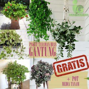 Paket tanaman hias gantung