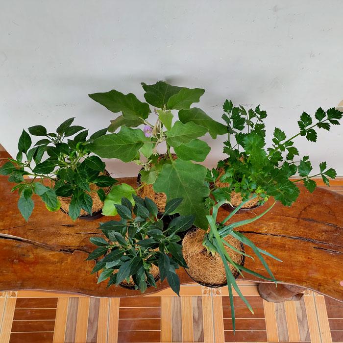 Paket tanaman sayur